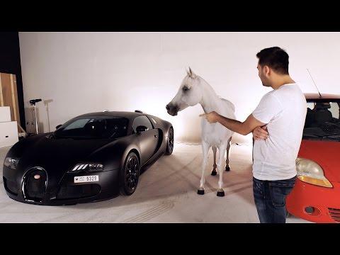 ANIMALS CHOOSING CARS