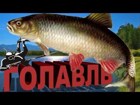 подводная охота ГОЛАВЛЬ