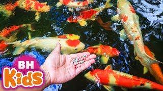 Cá Vàng Bơi XUÂN MAI ♫ Bé Tập Thể Dục ♫ Nhạc Thiếu Nhi Xuân Mai Vui Nhộn