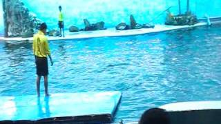 preview picture of video 'Dolphin shows in Chanthaburi,Thaiand'