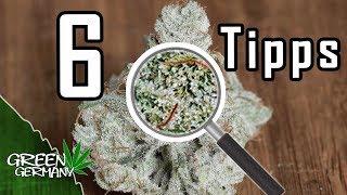 6 Tipps für sauberes GRAS beim HOMEGROW