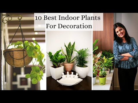 , title : '10 Best Indoor Plants For Decoration -  Low Maintenance Air purifying Houseplants