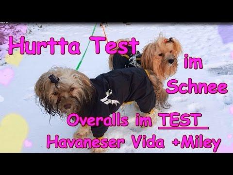 Hurtta !Havaneser Hunde im Schnee ! Overalls im Test ! Bekleidung Hund