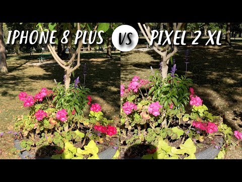 Google Pixel 2 XL vs iPhone 8 Plus in un primo camera test
