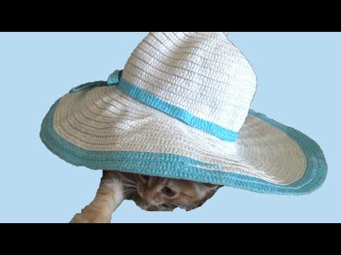 , title : 'Приколы с животными. Фокус Живая шляпа. Смешное видео для детей'
