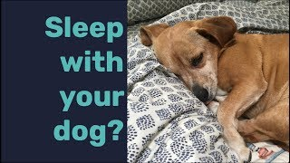 Should I Let My Dog Sleep with Me? | A Guide to Decide if You Should Let Your Dog in Your Bed