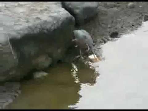 Ένας Ιπτάμενος… Ψαράς
