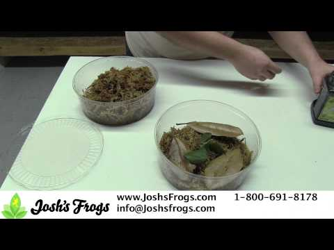 How to take care of Dart Frog Froglets