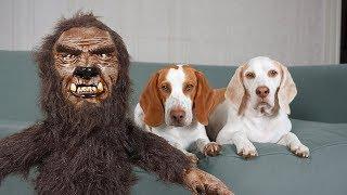 Dogs Rescue Baby Werewolf: Funny Halloween Dogs Maymo & Potpie