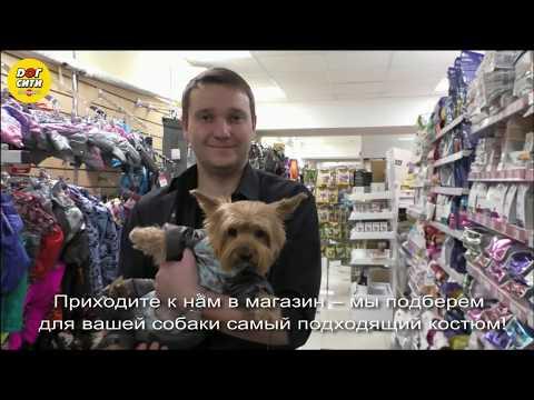 Как подобрать комбинезон для собаки