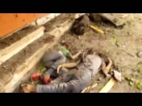 مقطع فيديو يصور شهداء ملقون في شوارع حي الشجاعية بقطاع غزة