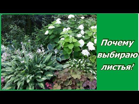Листья или цветы - на что делаю ставку в саду?   Декоративно лиственные растения в саду.