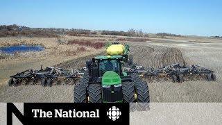 Chinese canola boycott pushing Canadian farmers toward other crops