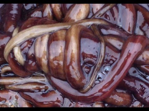 Die Prophylaxe der Würmer beim Kaninchen