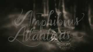 South and South 3: Amphibius Atlanticus / Poison Frog
