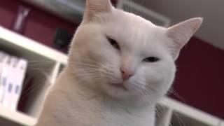 Коллекционеры Республика кошек
