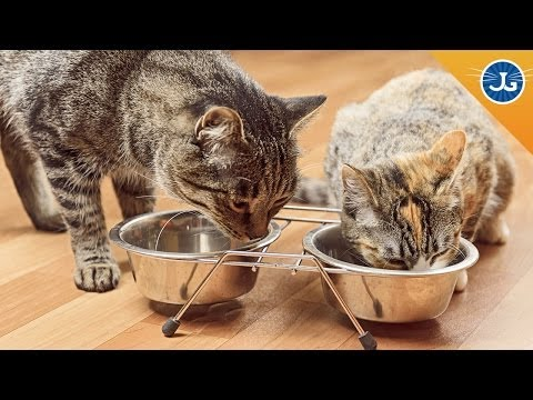 The Best Way To Introduce Your Two Cats