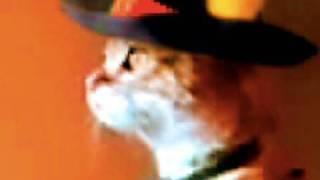 Вертикальная кошка — Z
