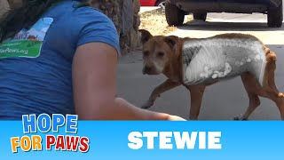 Download Youtube: Homeless dog was so hungry he ate rocks!  Thanks to your support, we saved his life!