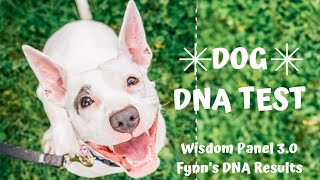 Wisdom Panel Dog DNA Test Review   Fynn's Results
