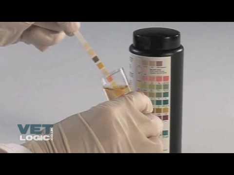 Pneumonija iz opće populacije u bolesnika s dijabetesom