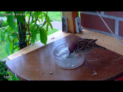 Was wenn die Würmer beim Kater zu machen