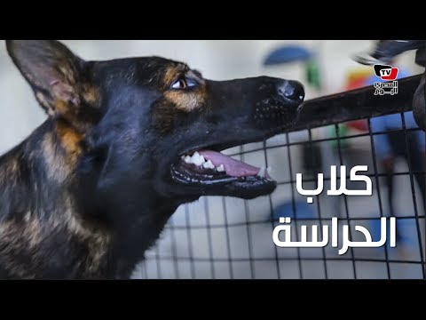 «تربية الكلاب».. كيف تحتفظ بكلب داخل منزلك بدون خطر