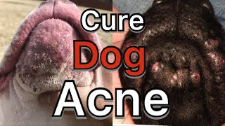 How to treat dog Acne, pimples, hot spots and dog allergies/ acne at home treatment ( 8 easy ways)