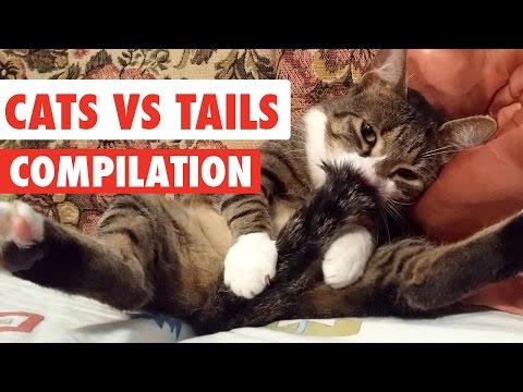 Cuando Los Gatos Persiguen Sus Colas, Este Es El Resultado