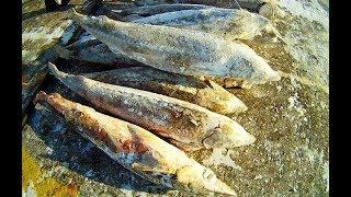 Ряпушка за 500, нельма за 10 811: на Ямале штрафы за незаконный вылов рыбы увеличились до 20 раз