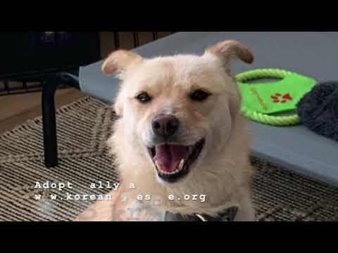 Sally, an adopted Jindo Mix in Brooklyn, NY_image-1