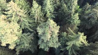 Flying through the RedWood Forest