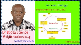 Photosynthesis lesson 2 of 2 A-level