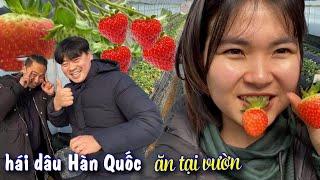 Vườn dâu Hàn Quốc, hái dâu ăn ngập mặt tại vườn (Cuộc sống Hàn Quốc)