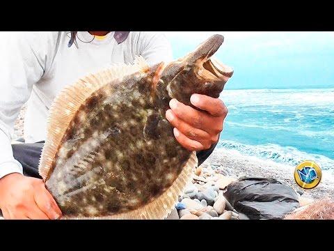 Causa di Odissee per pesca