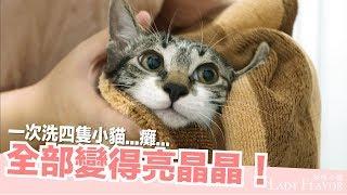 一次洗四隻小貓!全部變得亮晶晶【好味貓日常】EP21