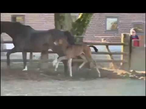 Video-Vorschau von Maracaná