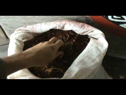 ReverdeSer (Siembra bolitas de arcilla en Amazonas)