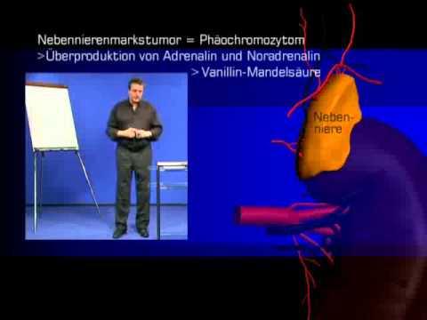 Wie die Analyse des Blutes auf die Würmer abgeben