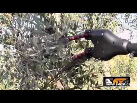 Olive Harvesting in Australia with a Nelson Harvester