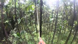 Spraying Pesticide on Arecanut Tree