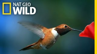 This is Hummingbird Heaven | United States of Animals