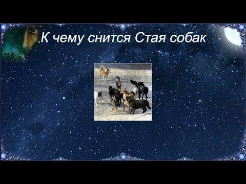 К чему снится Стая собак (Сонник)