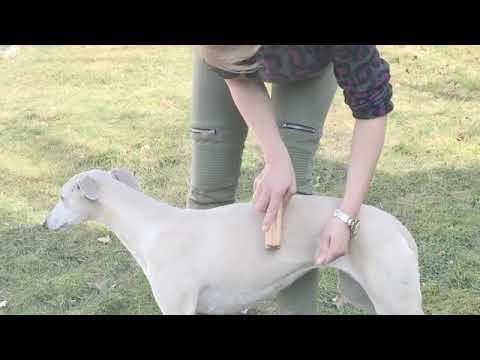 Fellpflege mit innovativem Hundekamm