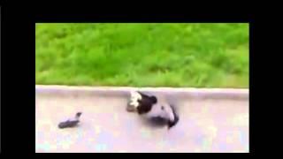 My Edited Video Достали бедного кота.