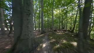 Cinematic FPV Flight through the woods.
