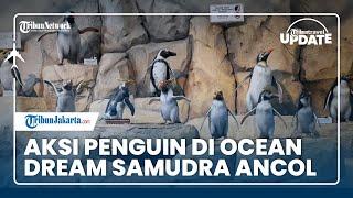 TRAVEL UPDATE: Aksi Penguin di Ocean Dream Samudra Ancol