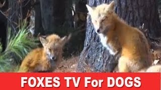Fox TV - A Film for Dogs