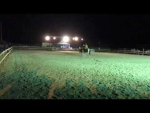 Lattivatore di cavallo il prezzo in Tomsk