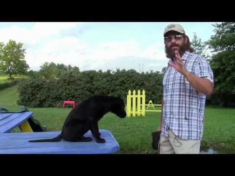 Training Your Labrador Retriever Puppy Part One - YouTube